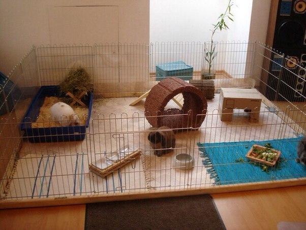 Как сделать кролика своими руками в домашних